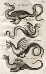 "Drachen in Ulisses Aldrovandis ""Monstrorum historia"", 16. Jh."